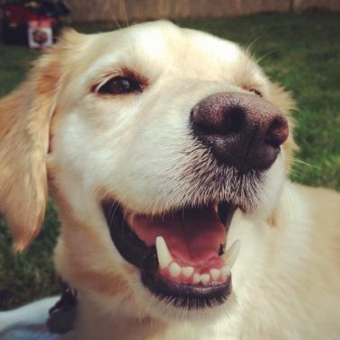 elsa's dog!